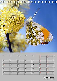 Farbenprächtige Tagfalter (Tischkalender 2019 DIN A5 hoch) - Produktdetailbild 6