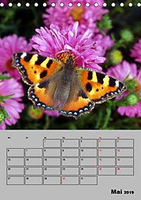 Farbenprächtige Tagfalter (Tischkalender 2019 DIN A5 hoch) - Produktdetailbild 5