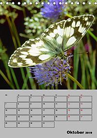 Farbenprächtige Tagfalter (Tischkalender 2019 DIN A5 hoch) - Produktdetailbild 10