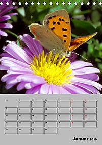 Farbenprächtige Tagfalter (Tischkalender 2019 DIN A5 hoch) - Produktdetailbild 1