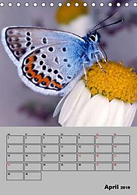 Farbenprächtige Tagfalter (Tischkalender 2019 DIN A5 hoch) - Produktdetailbild 4