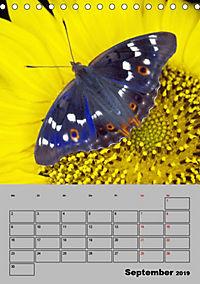 Farbenprächtige Tagfalter (Tischkalender 2019 DIN A5 hoch) - Produktdetailbild 9