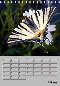 Farbenprächtige Tagfalter (Tischkalender 2019 DIN A5 hoch) - Produktdetailbild 7