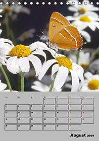 Farbenprächtige Tagfalter (Tischkalender 2019 DIN A5 hoch) - Produktdetailbild 8