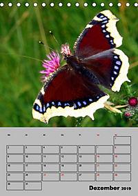 Farbenprächtige Tagfalter (Tischkalender 2019 DIN A5 hoch) - Produktdetailbild 12