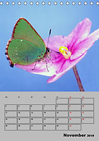 Farbenprächtige Tagfalter (Tischkalender 2019 DIN A5 hoch) - Produktdetailbild 11