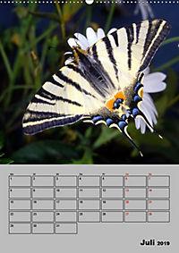 Farbenprächtige Tagfalter (Wandkalender 2019 DIN A2 hoch) - Produktdetailbild 7
