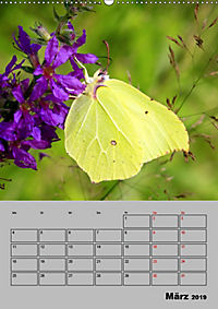Farbenprächtige Tagfalter (Wandkalender 2019 DIN A2 hoch) - Produktdetailbild 3