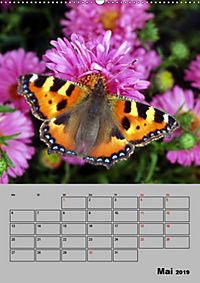 Farbenprächtige Tagfalter (Wandkalender 2019 DIN A2 hoch) - Produktdetailbild 5