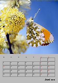 Farbenprächtige Tagfalter (Wandkalender 2019 DIN A2 hoch) - Produktdetailbild 6