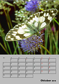 Farbenprächtige Tagfalter (Wandkalender 2019 DIN A2 hoch) - Produktdetailbild 10