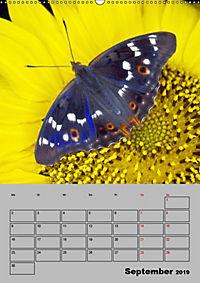 Farbenprächtige Tagfalter (Wandkalender 2019 DIN A2 hoch) - Produktdetailbild 9