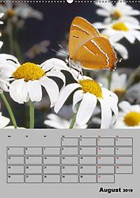 Farbenprächtige Tagfalter (Wandkalender 2019 DIN A2 hoch) - Produktdetailbild 8