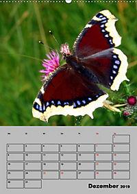 Farbenprächtige Tagfalter (Wandkalender 2019 DIN A2 hoch) - Produktdetailbild 12