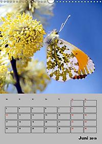 Farbenprächtige Tagfalter (Wandkalender 2019 DIN A3 hoch) - Produktdetailbild 6