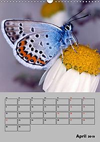 Farbenprächtige Tagfalter (Wandkalender 2019 DIN A3 hoch) - Produktdetailbild 4