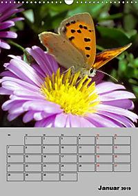 Farbenprächtige Tagfalter (Wandkalender 2019 DIN A3 hoch) - Produktdetailbild 1