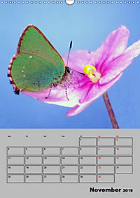 Farbenprächtige Tagfalter (Wandkalender 2019 DIN A3 hoch) - Produktdetailbild 11