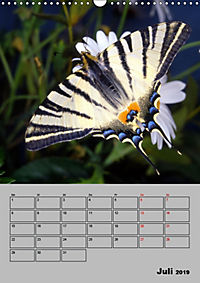 Farbenprächtige Tagfalter (Wandkalender 2019 DIN A3 hoch) - Produktdetailbild 7