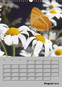 Farbenprächtige Tagfalter (Wandkalender 2019 DIN A3 hoch) - Produktdetailbild 8