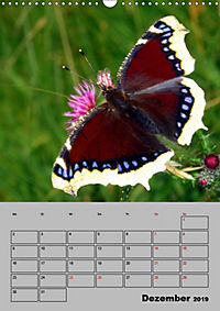 Farbenprächtige Tagfalter (Wandkalender 2019 DIN A3 hoch) - Produktdetailbild 12