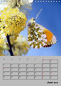 Farbenprächtige Tagfalter (Wandkalender 2019 DIN A4 hoch) - Produktdetailbild 6