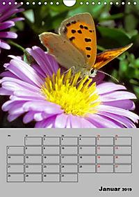 Farbenprächtige Tagfalter (Wandkalender 2019 DIN A4 hoch) - Produktdetailbild 1