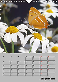 Farbenprächtige Tagfalter (Wandkalender 2019 DIN A4 hoch) - Produktdetailbild 8