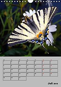 Farbenprächtige Tagfalter (Wandkalender 2019 DIN A4 hoch) - Produktdetailbild 7