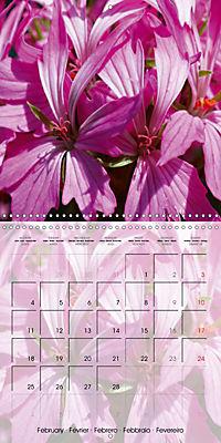 Fascinating Pelargonium (Wall Calendar 2019 300 × 300 mm Square) - Produktdetailbild 2