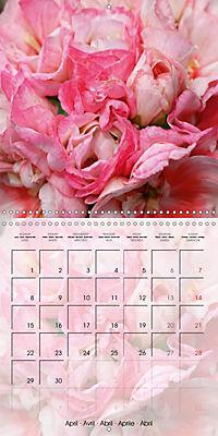 Fascinating Pelargonium (Wall Calendar 2019 300 × 300 mm Square) - Produktdetailbild 4