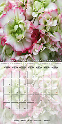 Fascinating Pelargonium (Wall Calendar 2019 300 × 300 mm Square) - Produktdetailbild 1