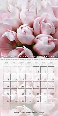 Fascinating Pelargonium (Wall Calendar 2019 300 × 300 mm Square) - Produktdetailbild 3