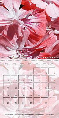 Fascinating Pelargonium (Wall Calendar 2019 300 × 300 mm Square) - Produktdetailbild 11