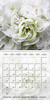 Fascinating Pelargonium (Wall Calendar 2019 300 × 300 mm Square) - Produktdetailbild 9