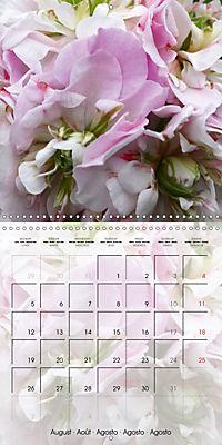 Fascinating Pelargonium (Wall Calendar 2019 300 × 300 mm Square) - Produktdetailbild 8