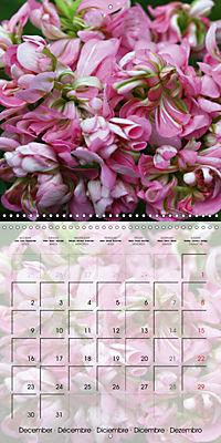Fascinating Pelargonium (Wall Calendar 2019 300 × 300 mm Square) - Produktdetailbild 12