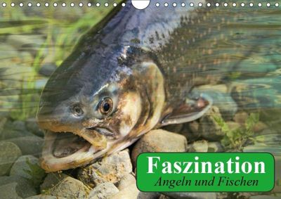 Faszination Angeln und Fischen (Wandkalender 2019 DIN A4 quer), Elisabeth Stanzer