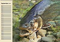 Faszination Angeln und Fischen (Wandkalender 2019 DIN A2 quer) - Produktdetailbild 9
