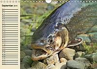 Faszination Angeln und Fischen (Wandkalender 2019 DIN A4 quer) - Produktdetailbild 9