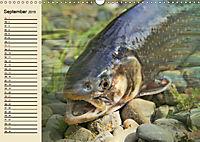 Faszination Angeln und Fischen (Wandkalender 2019 DIN A3 quer) - Produktdetailbild 9