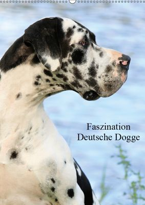 Faszination Deutsche Dogge (Wandkalender 2019 DIN A2 hoch), Marion Reiss-Seibert