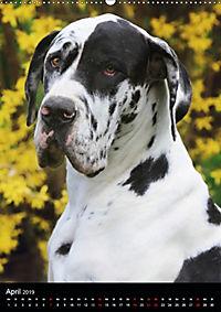 Faszination Deutsche Dogge (Wandkalender 2019 DIN A2 hoch) - Produktdetailbild 4