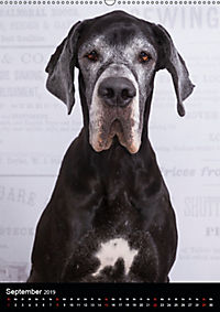 Faszination Deutsche Dogge (Wandkalender 2019 DIN A2 hoch) - Produktdetailbild 9