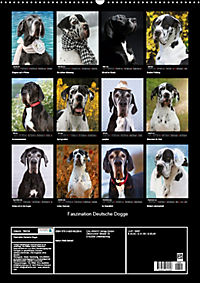 Faszination Deutsche Dogge (Wandkalender 2019 DIN A2 hoch) - Produktdetailbild 13