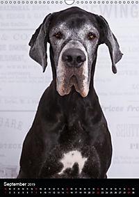 Faszination Deutsche Dogge (Wandkalender 2019 DIN A3 hoch) - Produktdetailbild 9