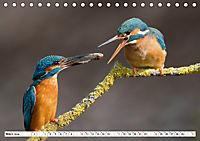 Faszination Eisvogel (Tischkalender 2019 DIN A5 quer) - Produktdetailbild 3