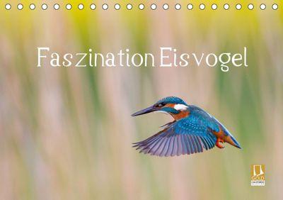 Faszination Eisvogel (Tischkalender 2019 DIN A5 quer), Wilfried Martin