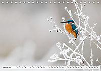Faszination Eisvogel (Tischkalender 2019 DIN A5 quer) - Produktdetailbild 1