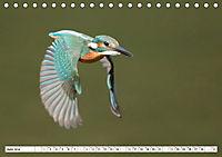 Faszination Eisvogel (Tischkalender 2019 DIN A5 quer) - Produktdetailbild 6